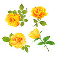 rose yellow and leaves set first vintage vector image