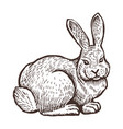 farm rabbit animal sketch isolated farm on the vector image vector image