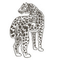 leopard animal with spotted fur wild mammals vector image