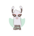 llama in sunglasses and lipstick vector image