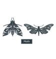 monochrome drawing set moth vector image vector image