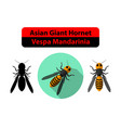 asian giant hornet or vespa mandarinia on white vector image