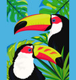 cute toucan card vector image