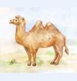 vintage of standing camel on desert background vector image