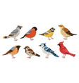 wild forest birds winter wildlife animal birds vector image vector image