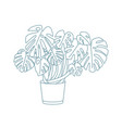 elegant drawing of monstera growing in pot exotic vector image