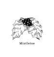 mistletoe branch hand drawn on white vector image vector image