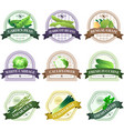 Vegetable and Herbs Flat Labels Set vector image