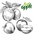 apple fruit set hand drawn vector image vector image