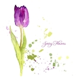 card with watercolor tulip vector image vector image