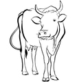cow animal vector image vector image