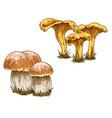 mushrooms orange cap boletus and chanterelles vector image vector image