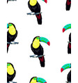 pattern with toucan on white background vector image vector image