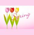 three spring tulips vector image