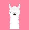 llama alpaca animal face neck fluffy hair fur vector image vector image