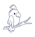 cute parrot in branch tree cartoon isolated icon vector image