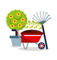cute potted tree flower wheelbarrow plants and vector image