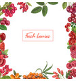 fresh berries hand drawn frame vector image vector image