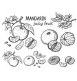 oranges hand drawn sketch vector image vector image