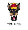 russian toy terrier crown dog portrait vector image