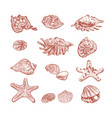 seashells starfish clam hand drawn sketch vector image