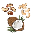 Collection of cashew coconut and brazil nuts vector image vector image