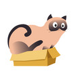 cute siamese cat sitting in a cardboard box vector image
