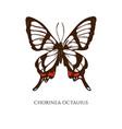 set hand drawn colored chorinea octauius vector image