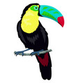 toucan isolated on white vector image vector image