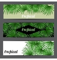 Banners with palms leaves Decorative image vector image