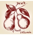 fruit pears on the branch hand drawn vector image vector image
