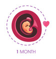 1 month fetus in uterus pregnancy stage ovum vector image