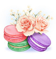 cute watercolor pastel macarons with pink roses vector image vector image