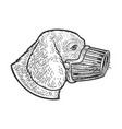 muzzled dog sketch vector image vector image