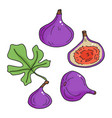set with hand drawn figs in cartoon style vector image vector image