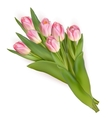 Tulips isolated on white background EPS 10 vector image