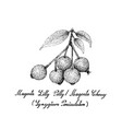 berry fruit hand drawn sketch of magenta lilly vector image vector image