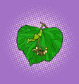 linden tree leaf vector image