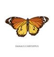 set hand drawn colored danaus chrysippus vector image