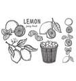 vintage lemon tree sketch vector image vector image