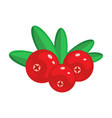 cranberry isolated on whit vector image vector image