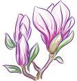 magnolia branch vector image