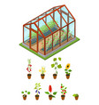 greenhouse with flowers and plants isometric view vector image