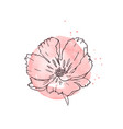 hand drawn poppy isolated vector image vector image