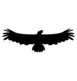 eagle on white background vector image
