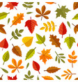 autumn leaves seamless pattern on white background vector image