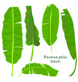 branch tropical palm banana leaves realistic vector image vector image