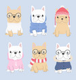 cute french bulldog puppy in winter sweater vector image