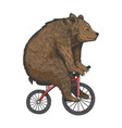 bear on bicycle sketch engraving style vector image