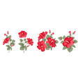 set different hibiscus on white background vector image